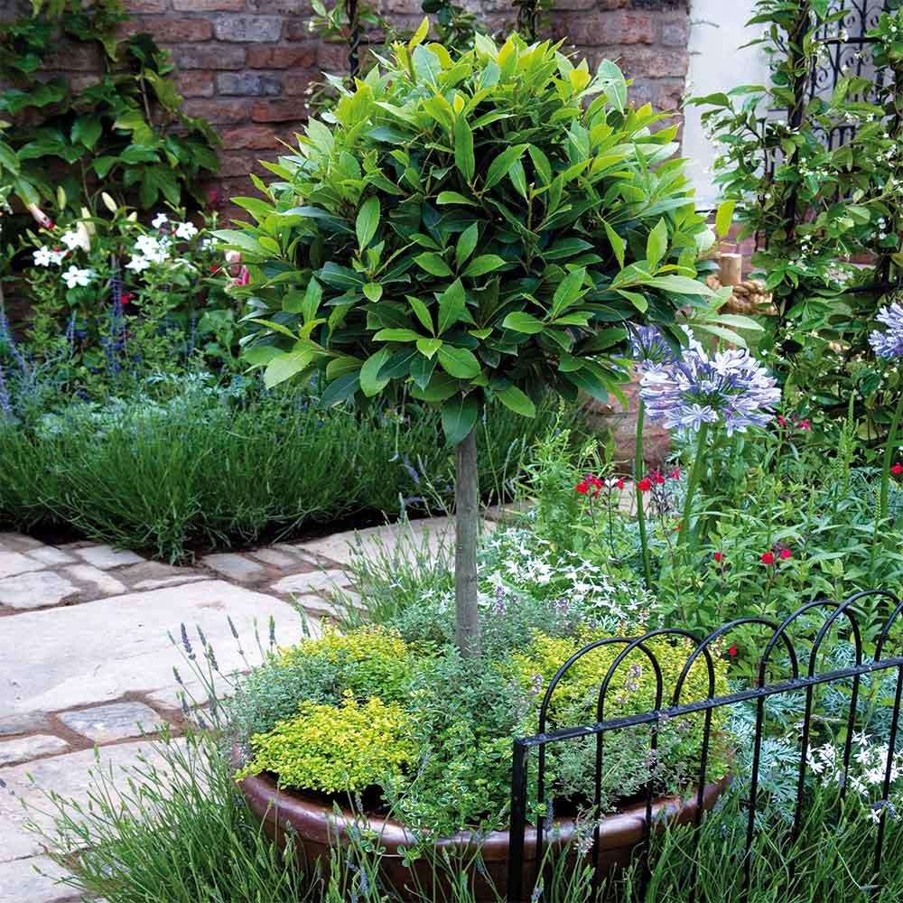Fragrant garden pot – Bay, Thyme & Lavender