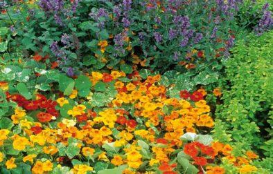 Gardening for colour