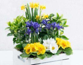 Win a colourful planter