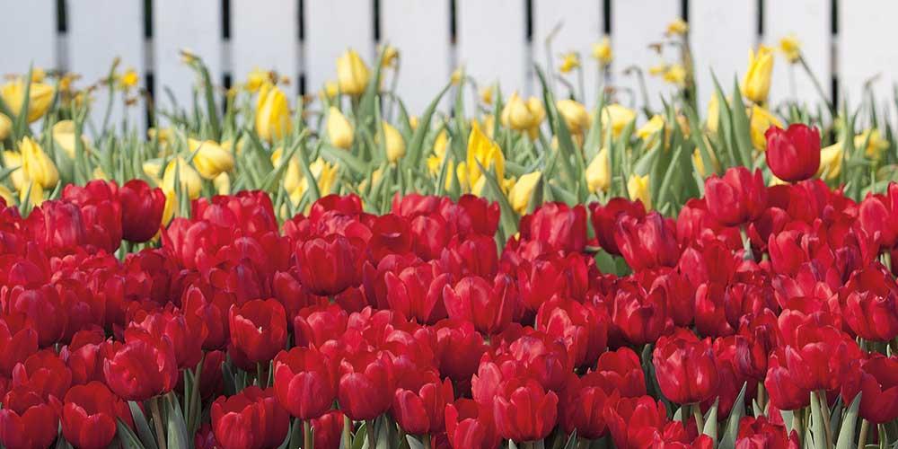 Garden tricks with colour