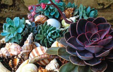 create year-round garden interest