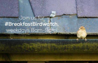 #BreakfastBirdwatch
