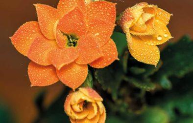 Let's hear it for houseplants